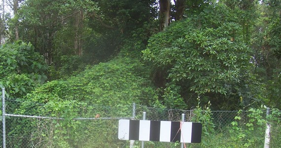 Closer shot of the thick           jungle over the sign and fence shown at the end of Swallow           Street in the first photo.